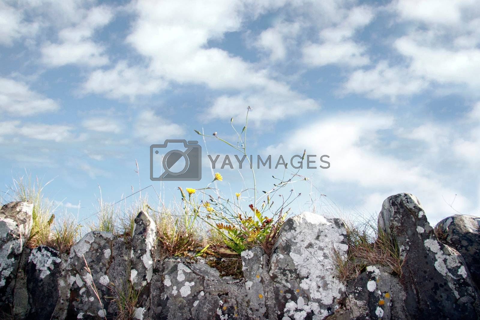 the top of an old irish stone wall