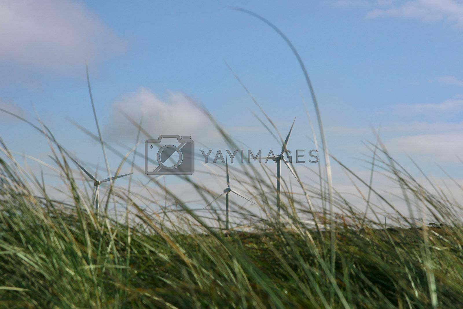 a wind farm off the irish coast