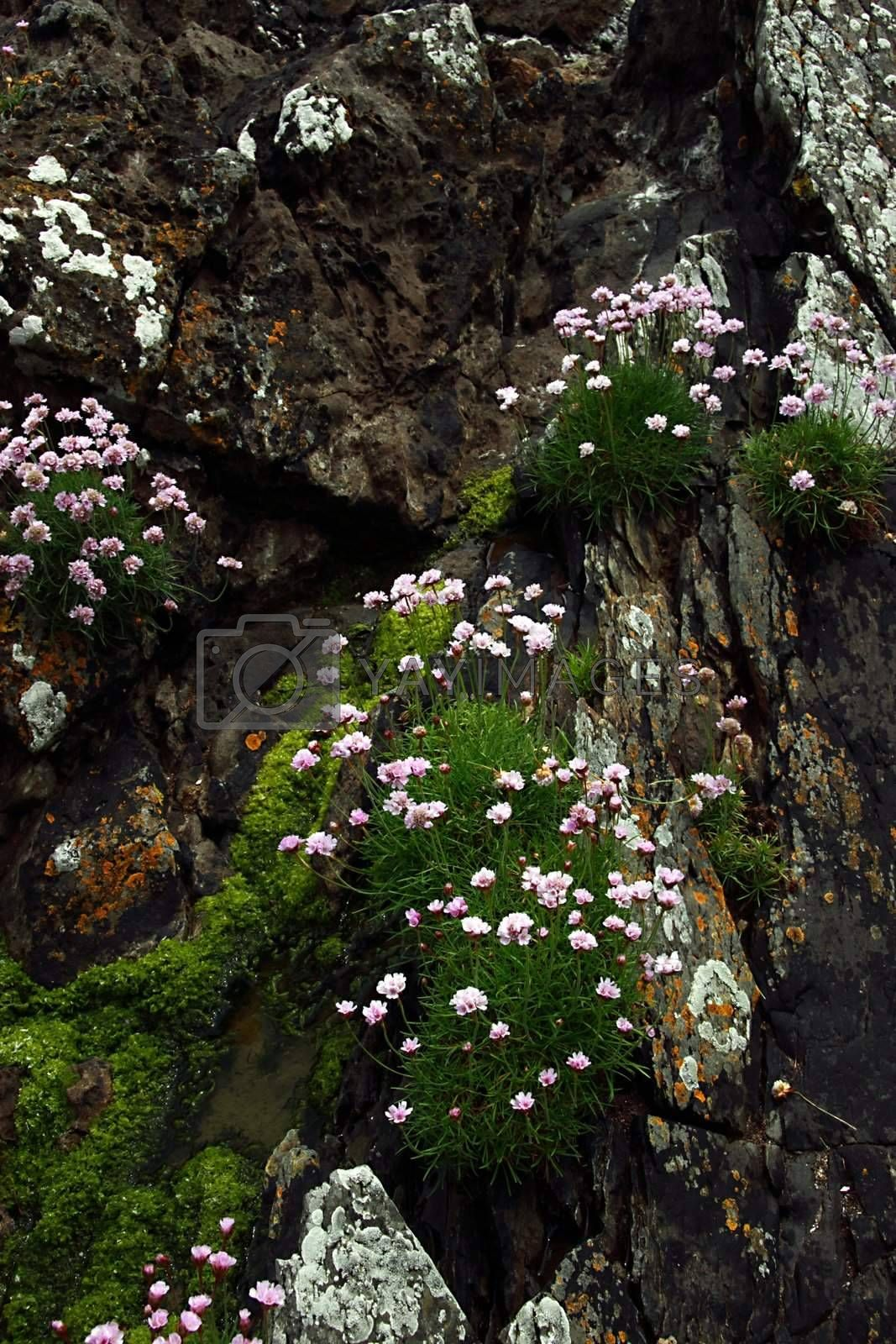wild flowers on the rocks of a cliff