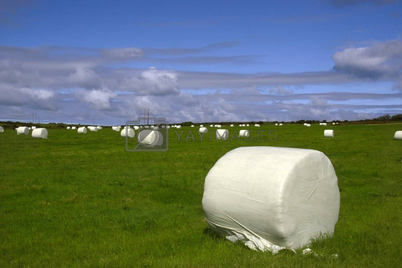 a field of bales in the west of ireland