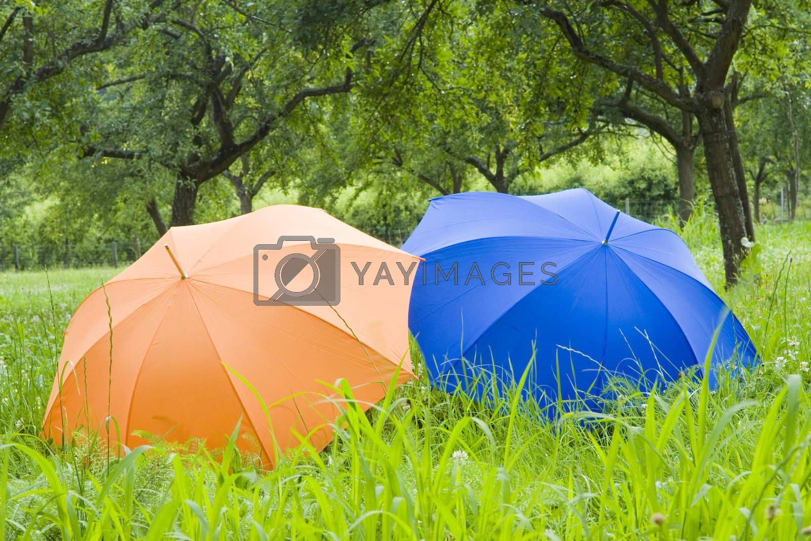 Orange and blue umbrellas in a meadow of green grass