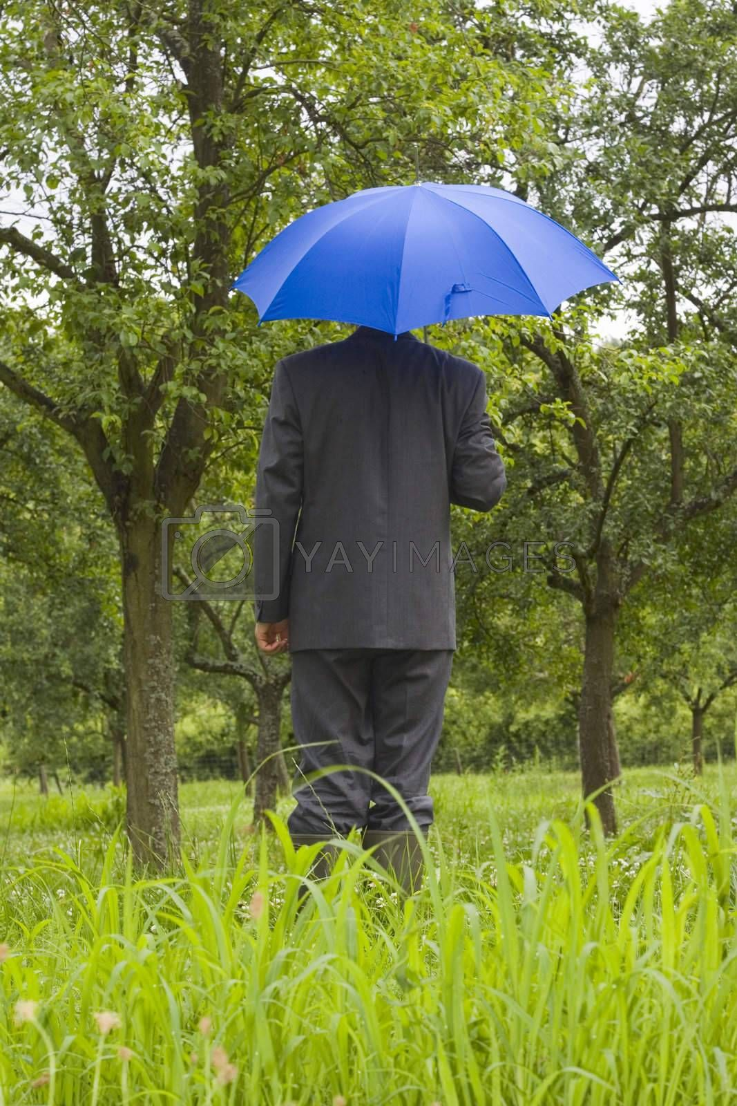 Businessman with blue umbrella in a meadow
