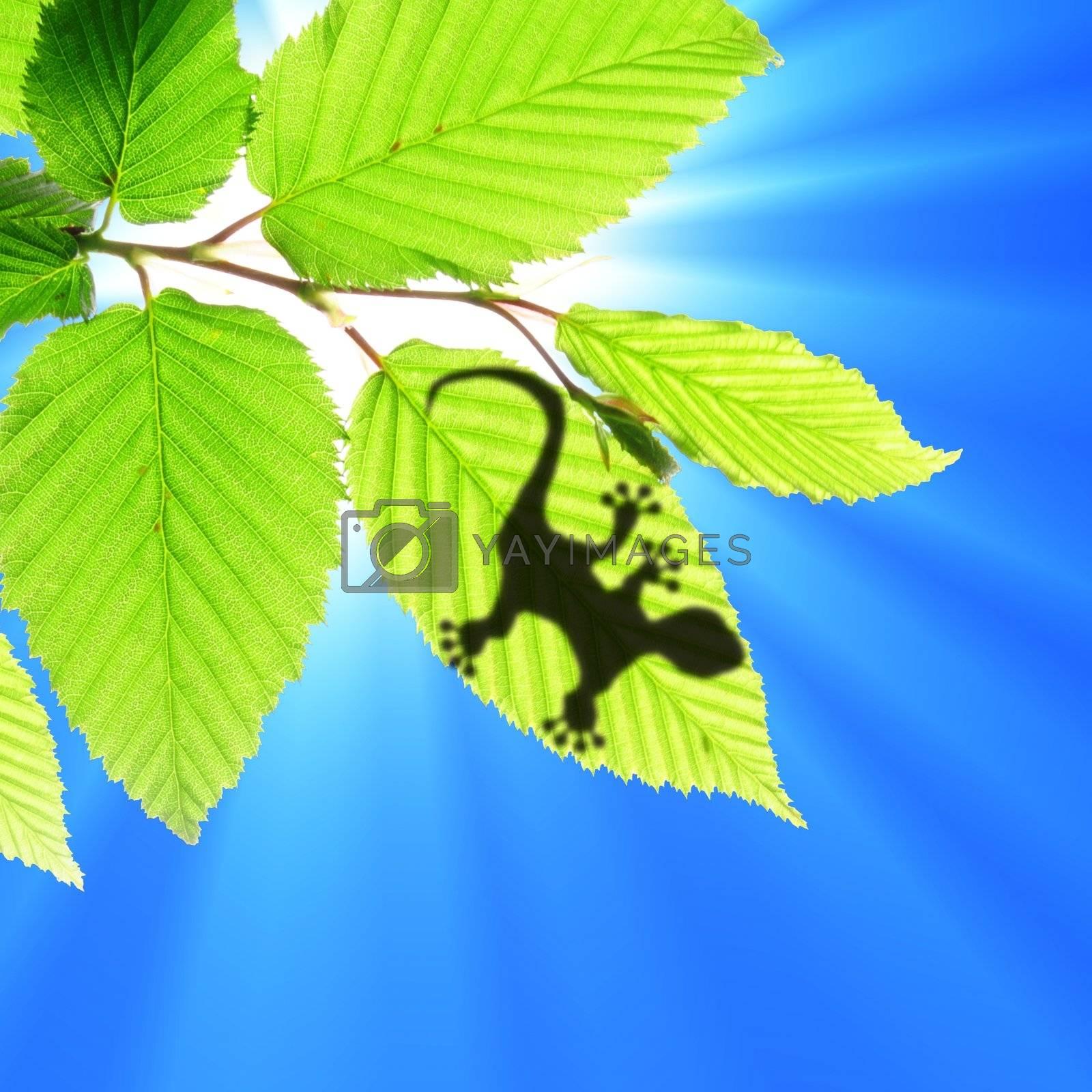 gecko shadow on leaf by gunnar3000