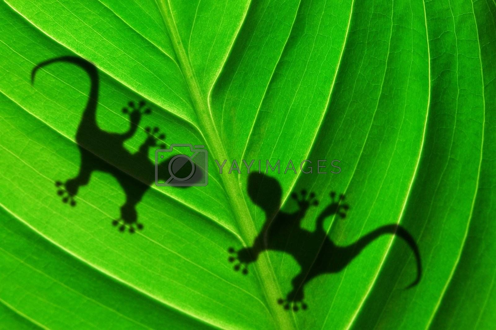 Royalty free image of green jungle leaf and gecko by gunnar3000