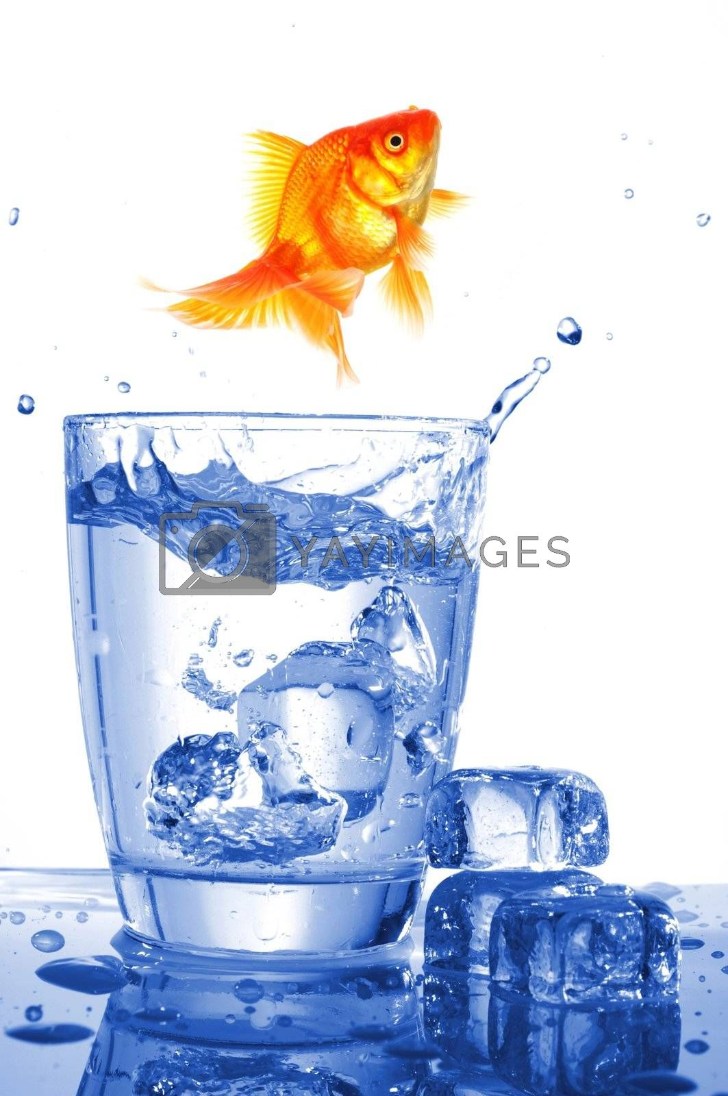 Royalty free image of goldfish in glass water by gunnar3000