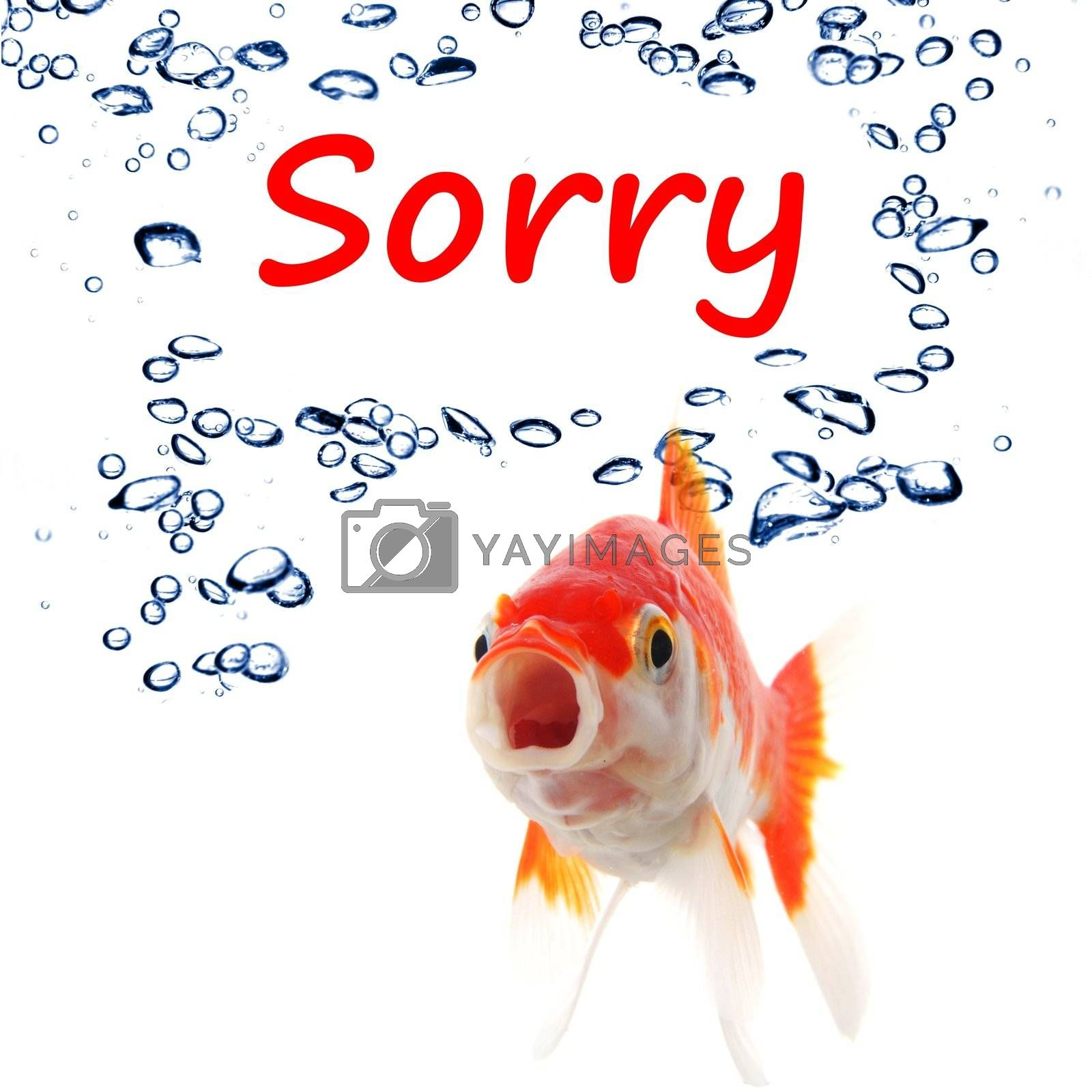 sorry concept with word and goldfish isolated on white background