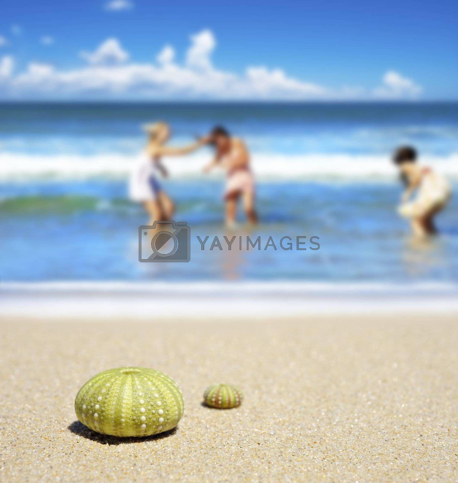 Beach scene with two dead sea urchin shells and girls playing in the waves
