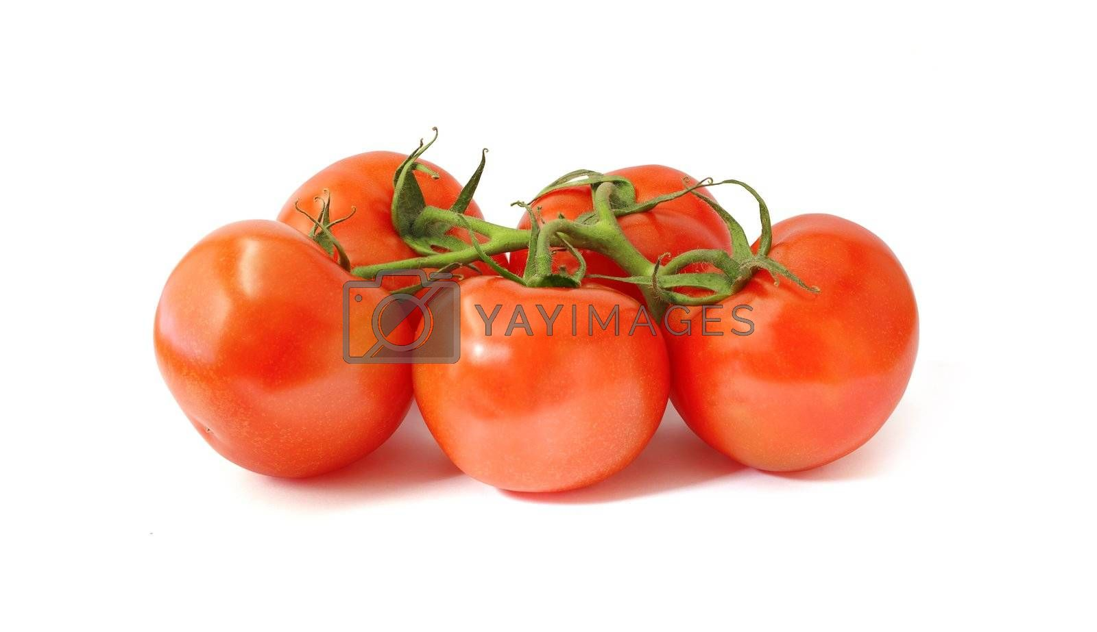 fresh tomatoes with green leaves on white