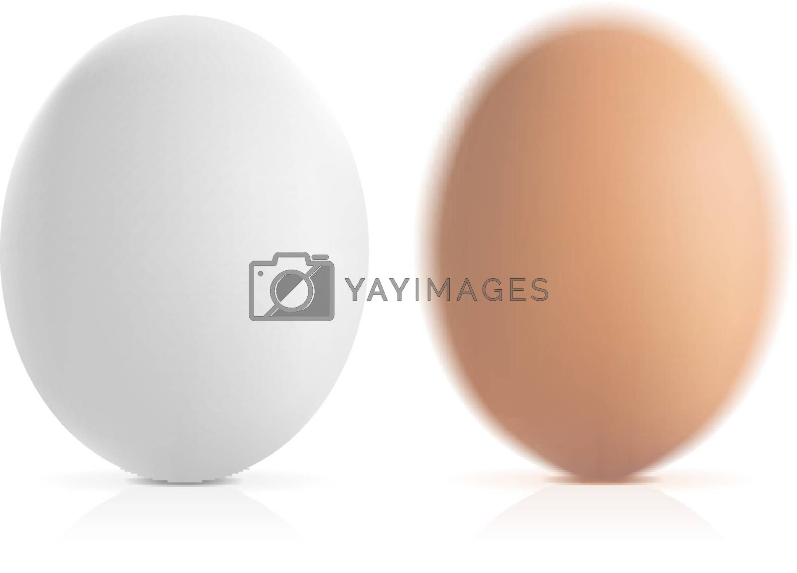 brown and white vector eggs with shadow and reflection on white background
