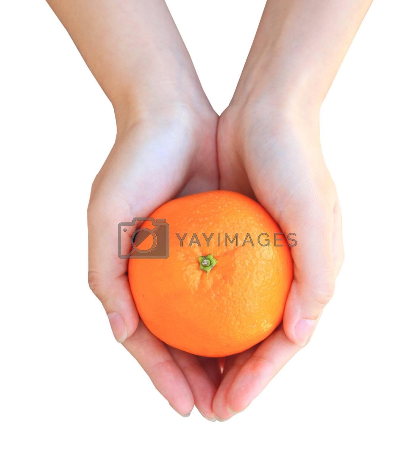 Hands holding orange isolated on white background
