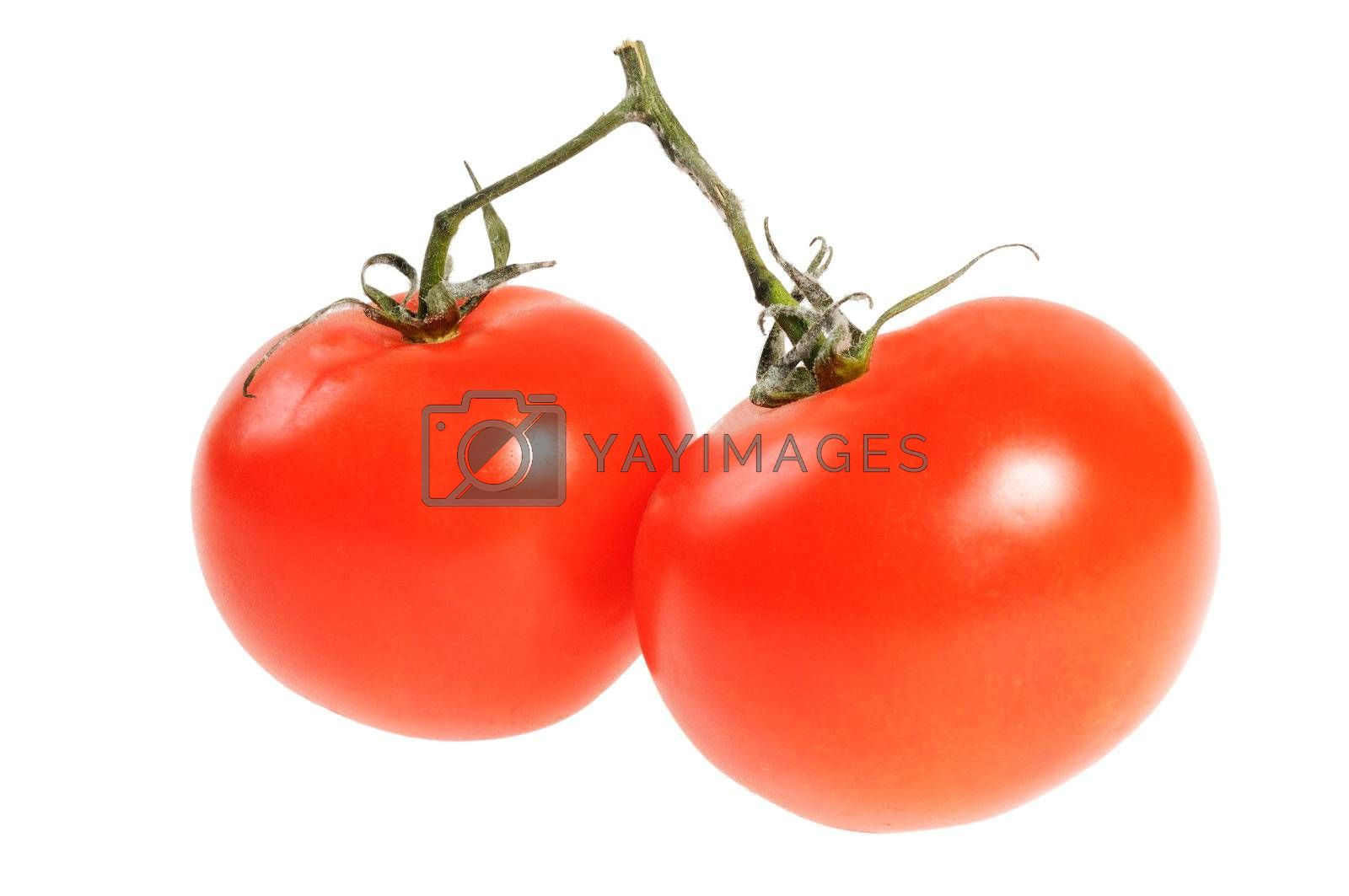Two tomato on branch. Isolated on white background.