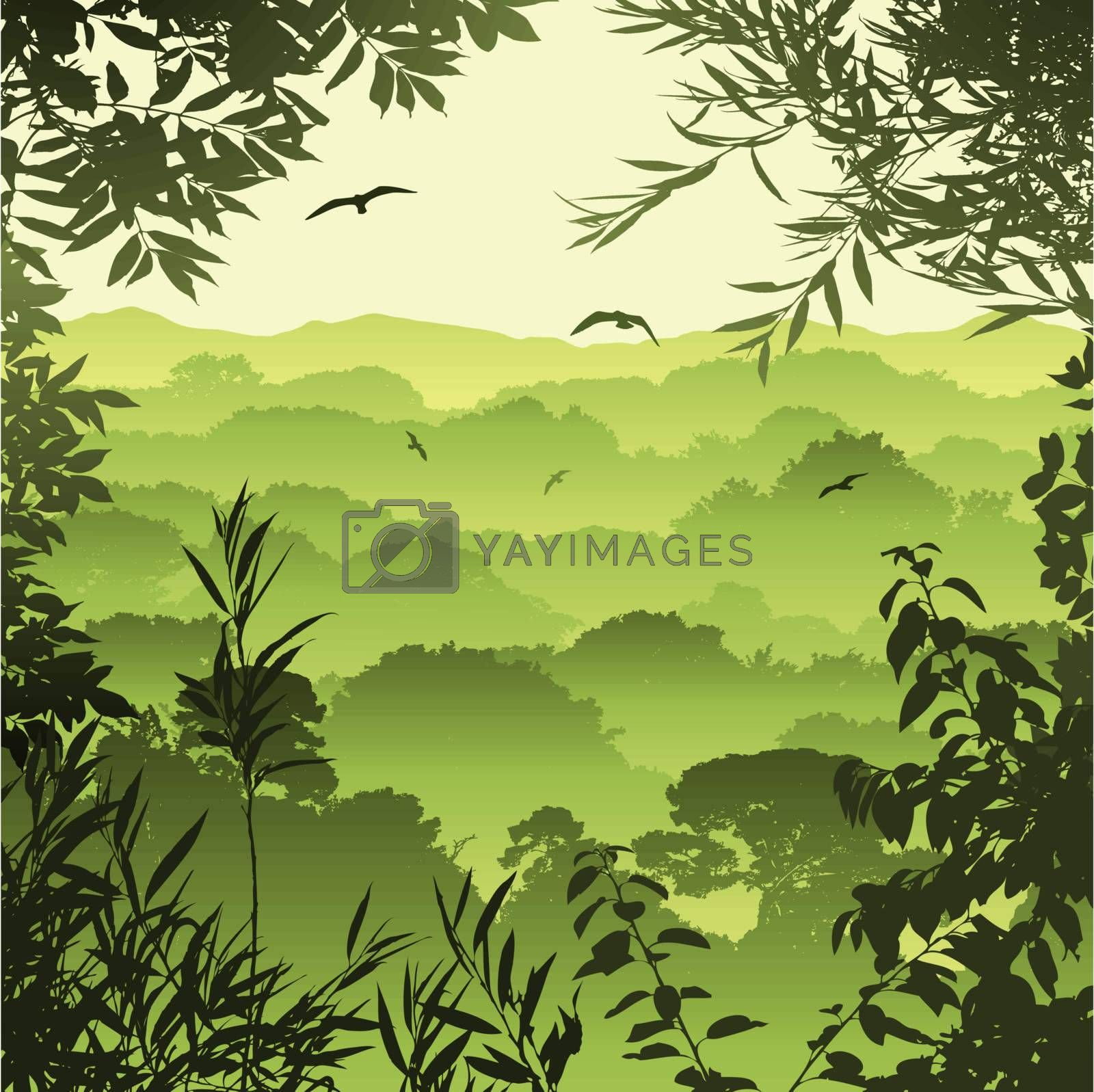 A Green Forest Landscape with Trees and Leaves