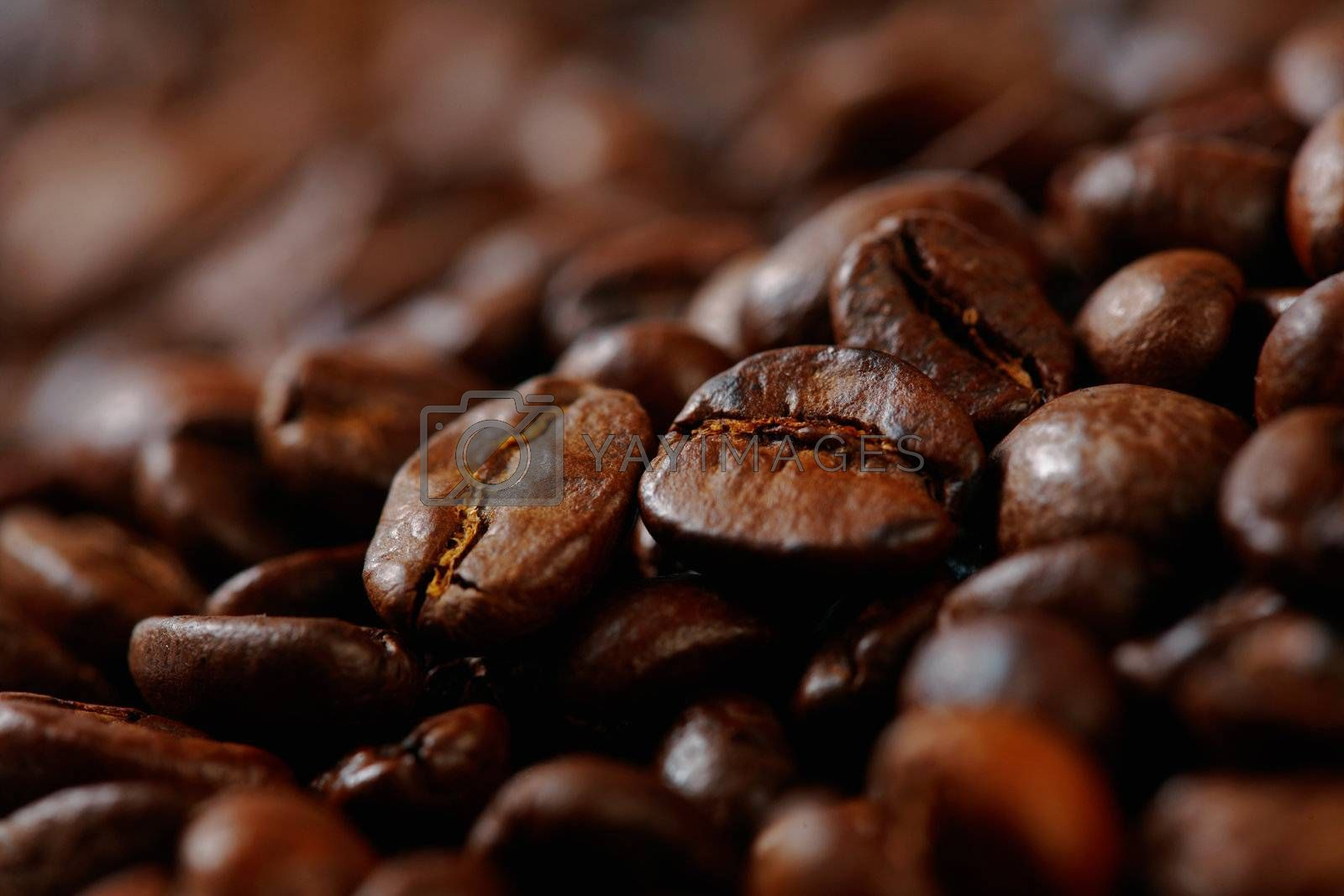 Coffee Beans. Selective focus