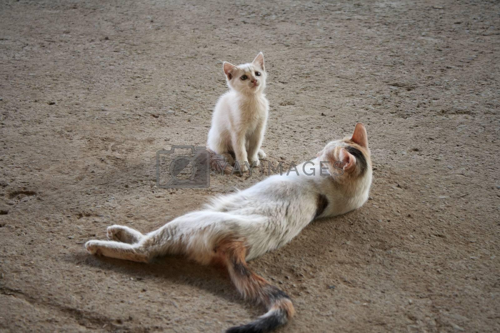 Sleeping cat and little kitten lying on the concrete floor, it's hot.