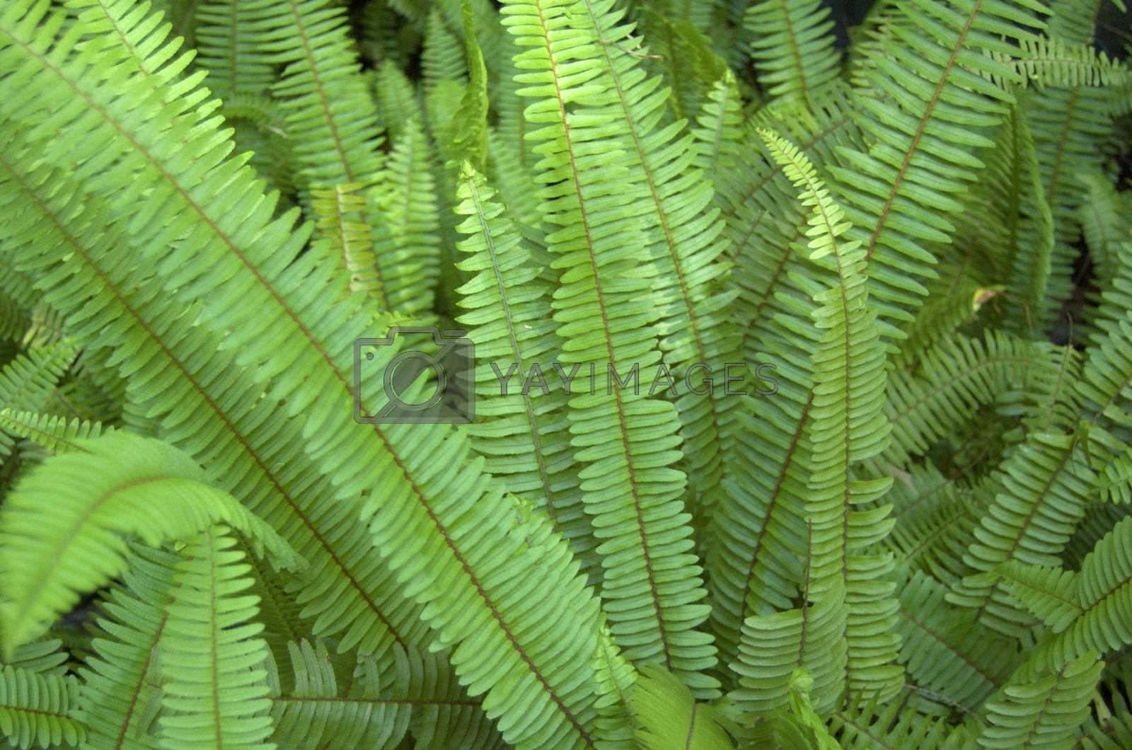 Ferns in Florida