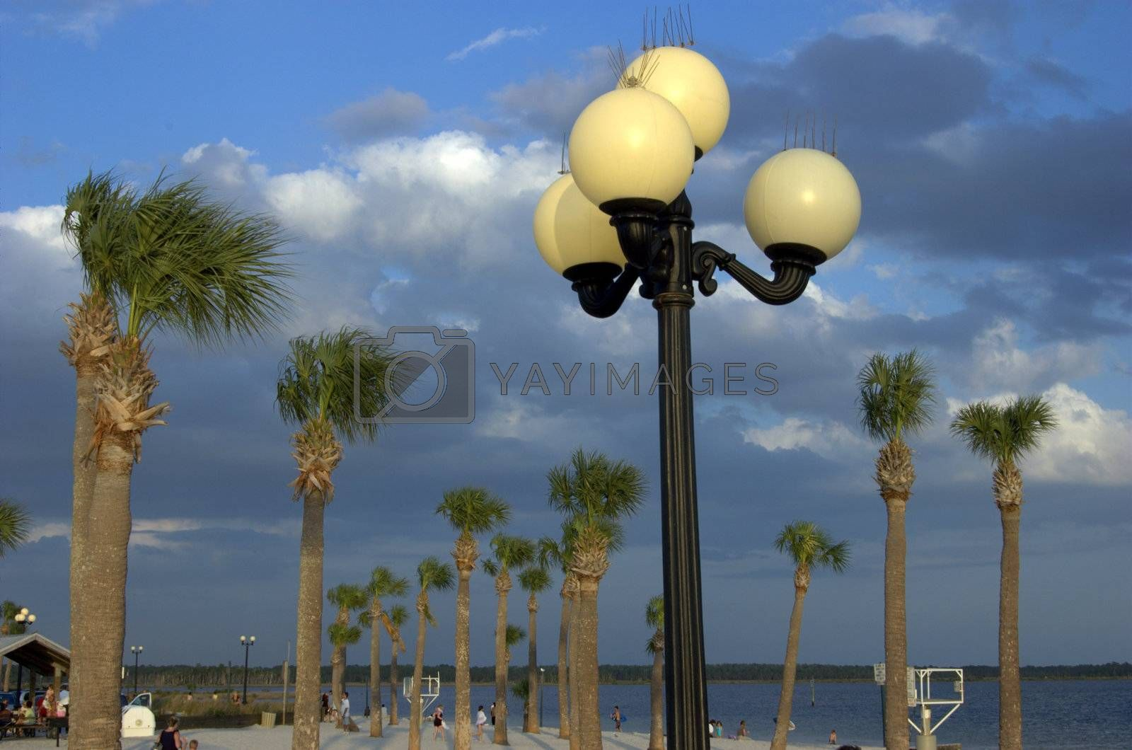lights shown with palm trees