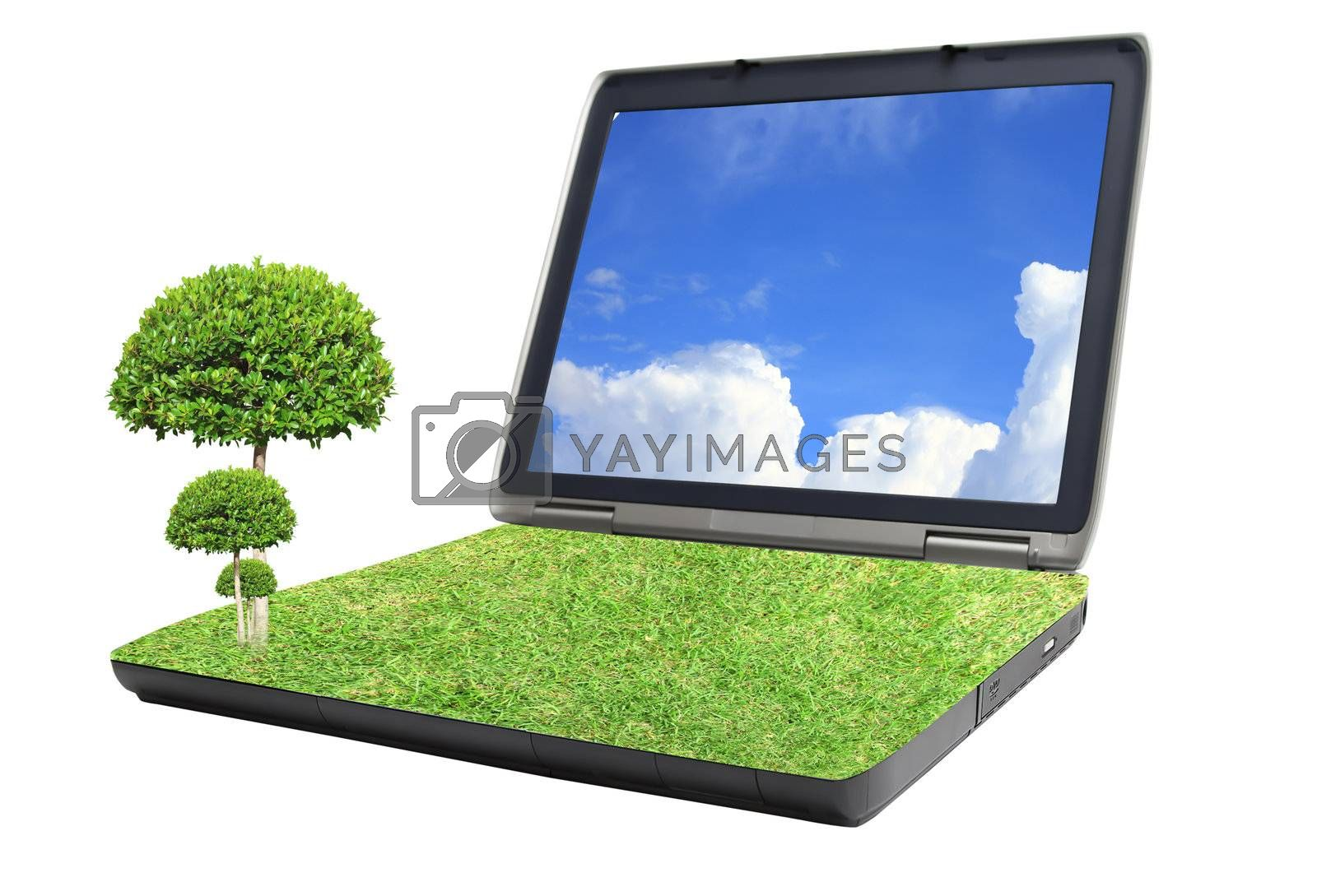 tree on grass laptop