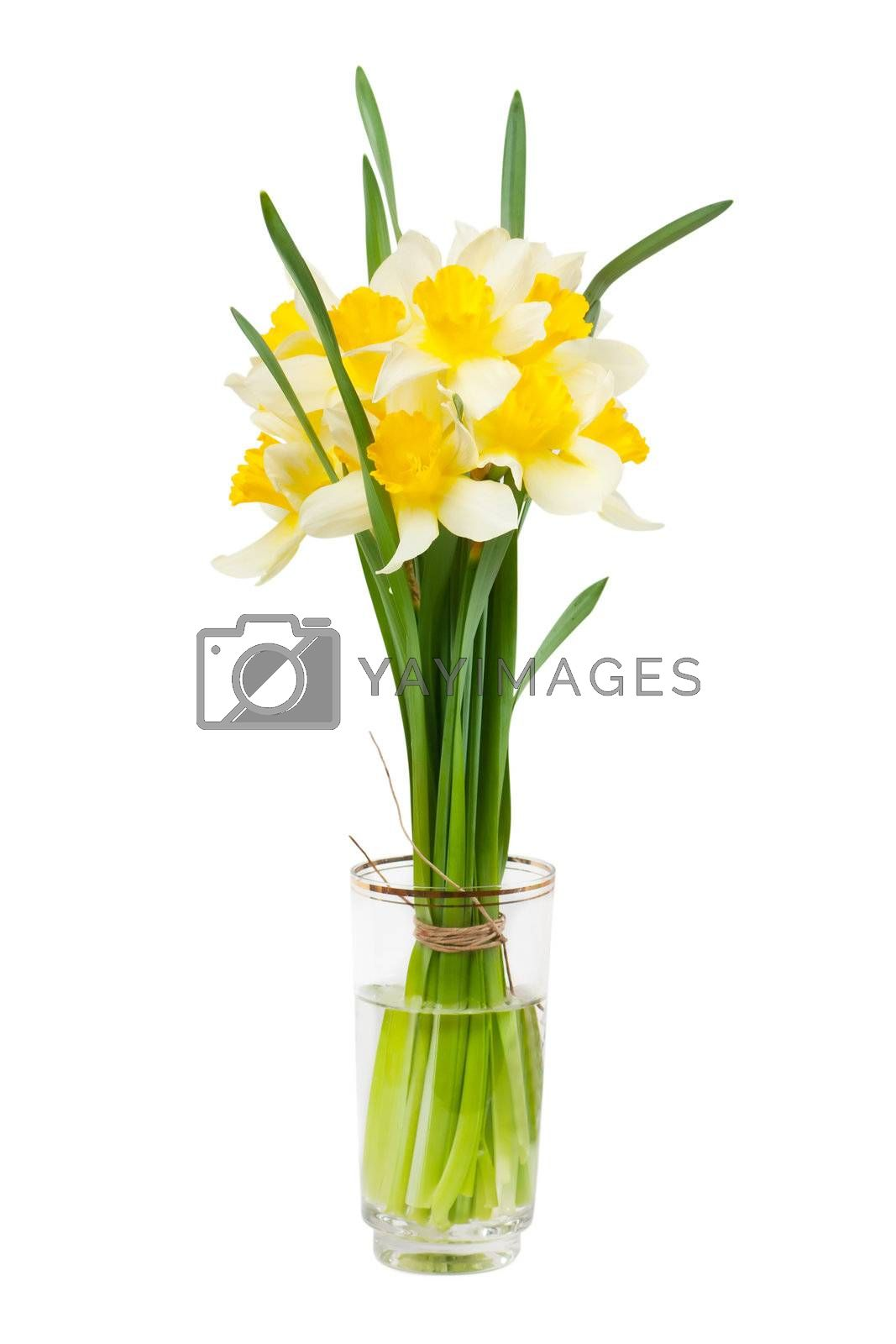 A bouquet of narcissuses in a glass with water isolated over white