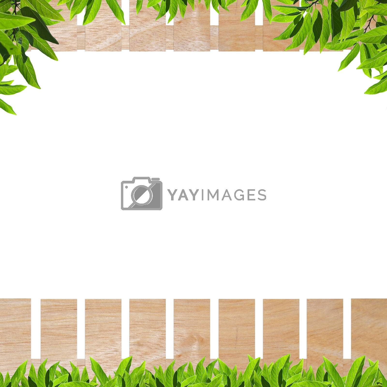 Wooden fence with green leaf isolate on white