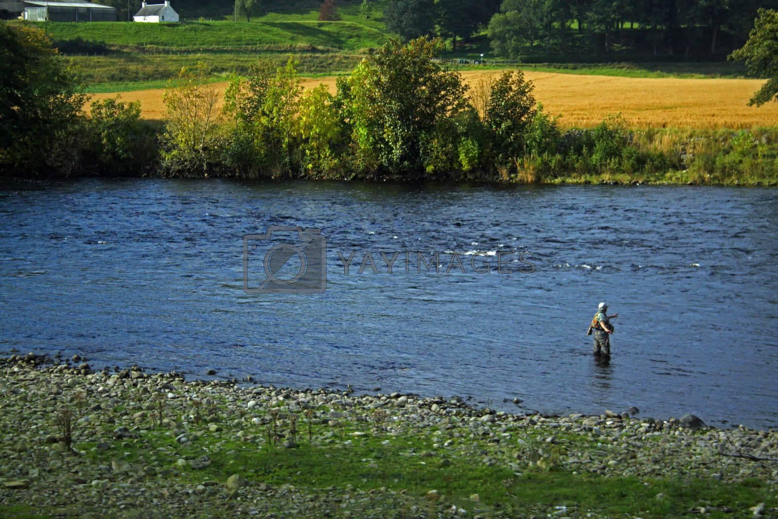 Fisherman angling waist deep in a stream in Scottland