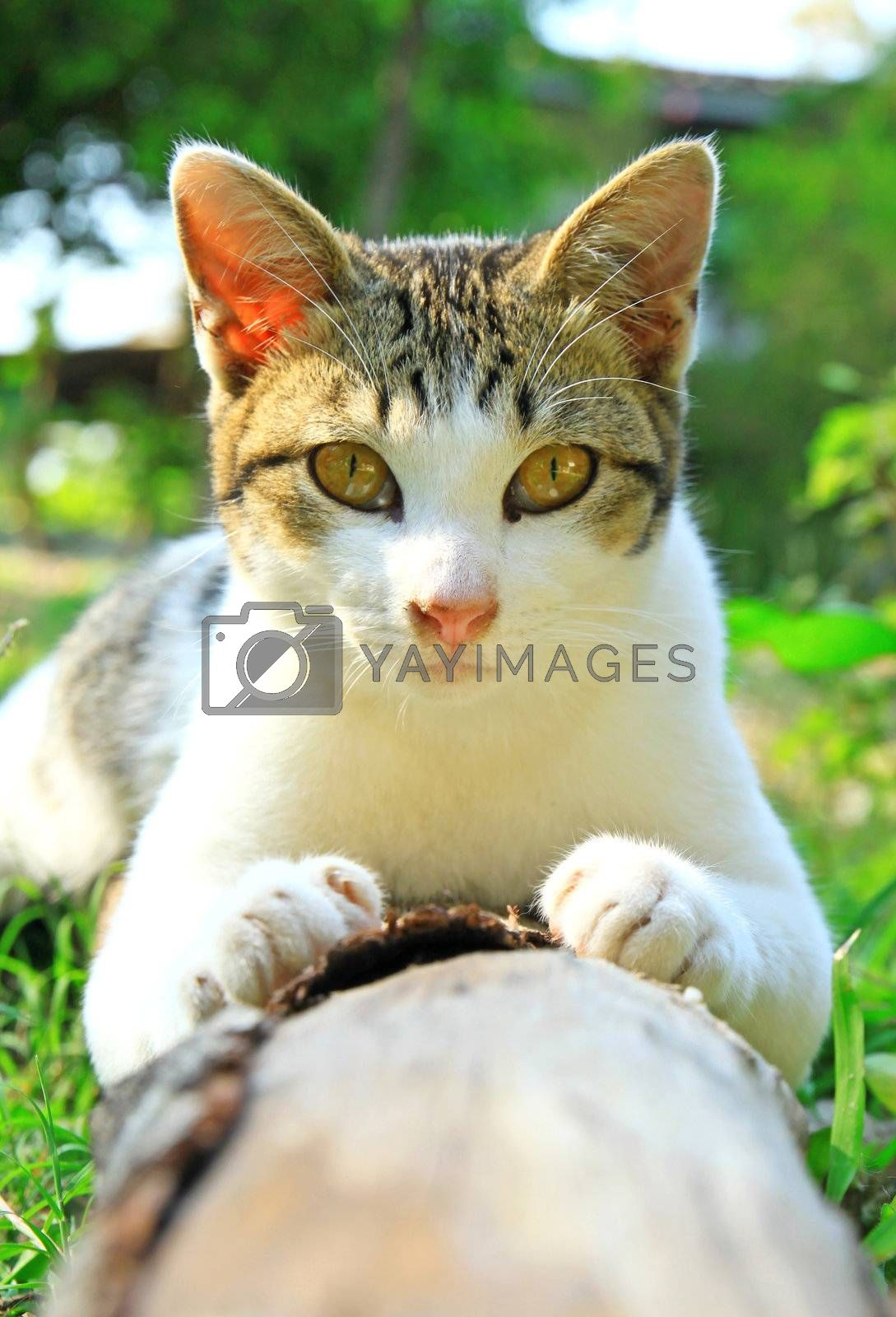 a cute cat lying on log wood in the garden