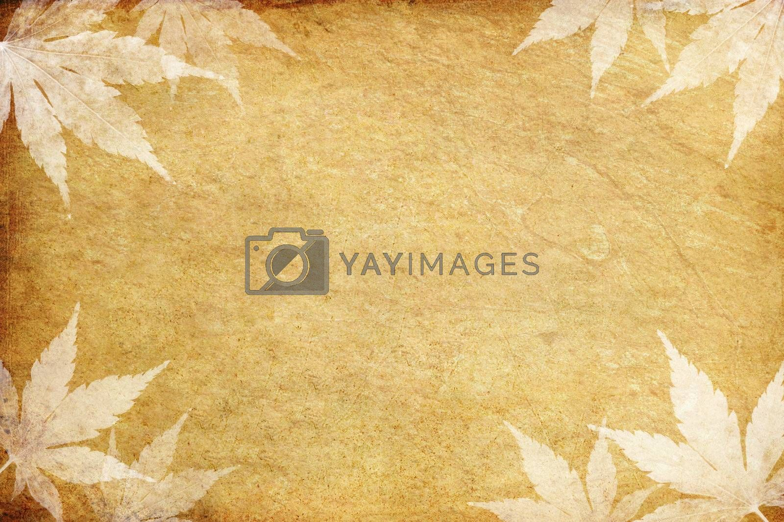 old grunge paper and leaf with copy space