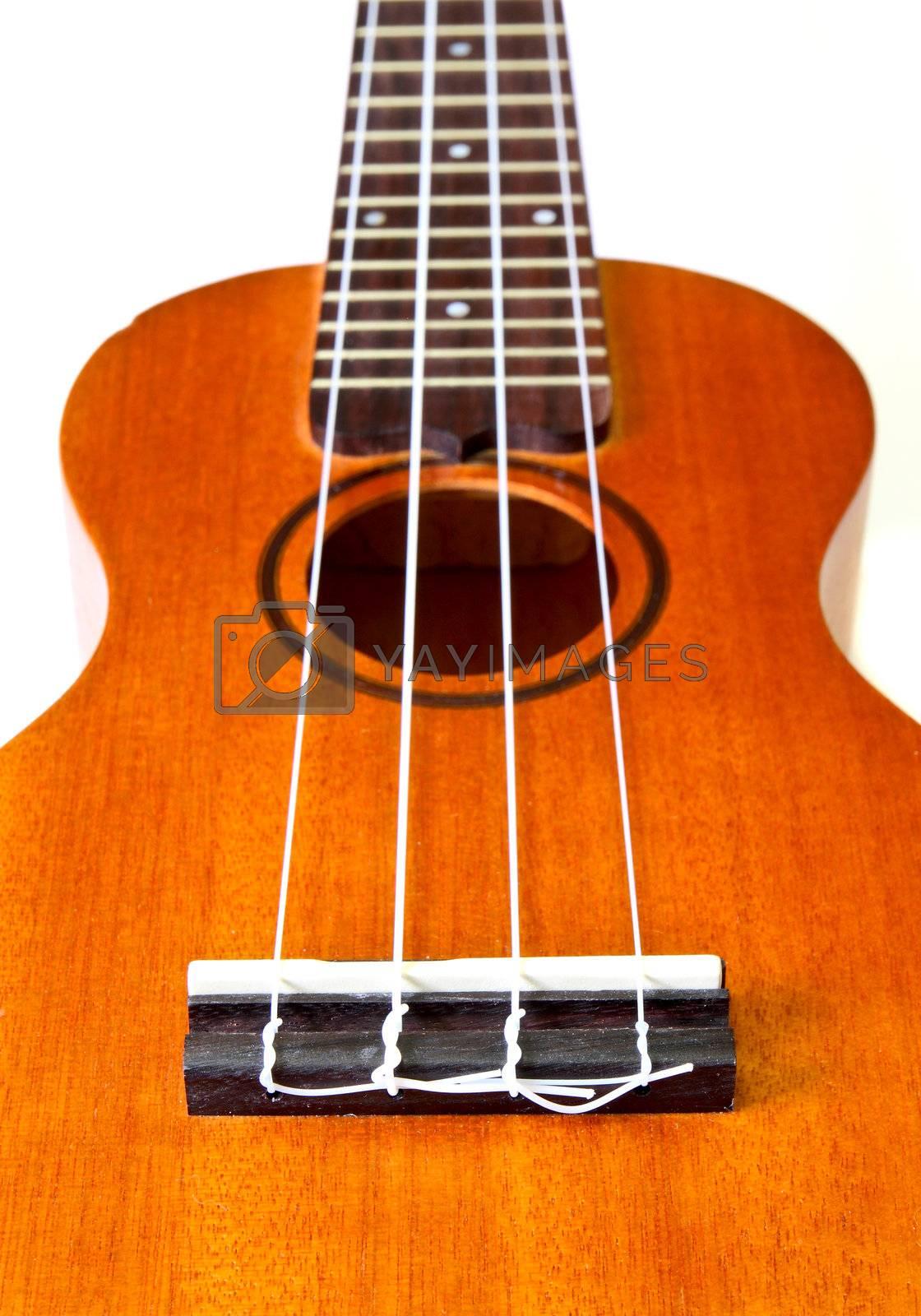 perspective of ukulele isolated on white background