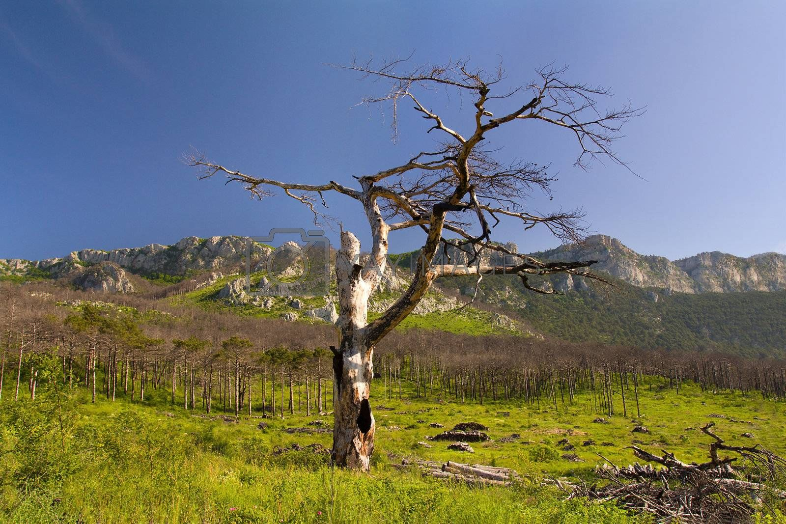 mountains landscape with lonely tree