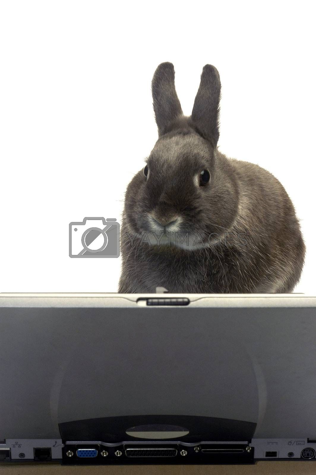 rabbit to illustrate the webmaster e-commerce
