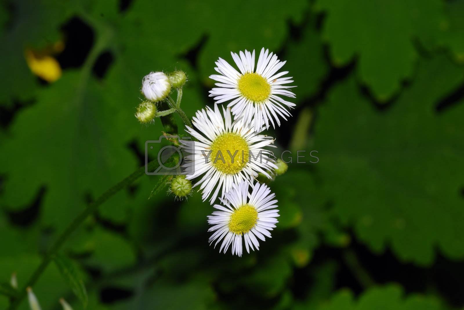 Weeds by pazham