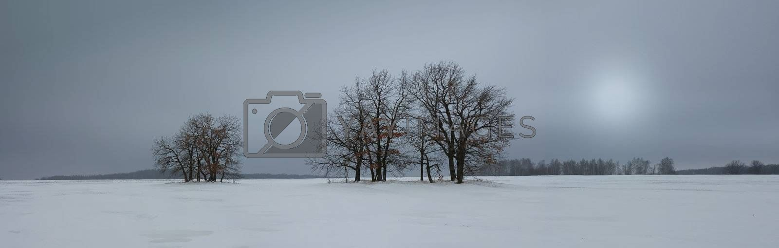 Royalty free image of Winter landscape by oleg_zhukov