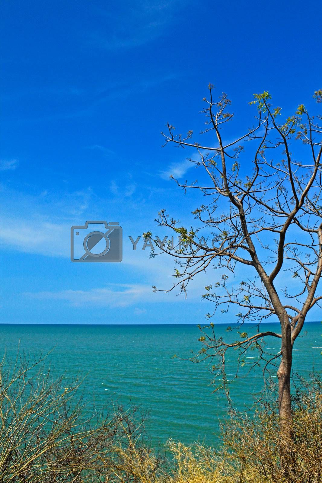 Tree from the top of mountain with blue sea