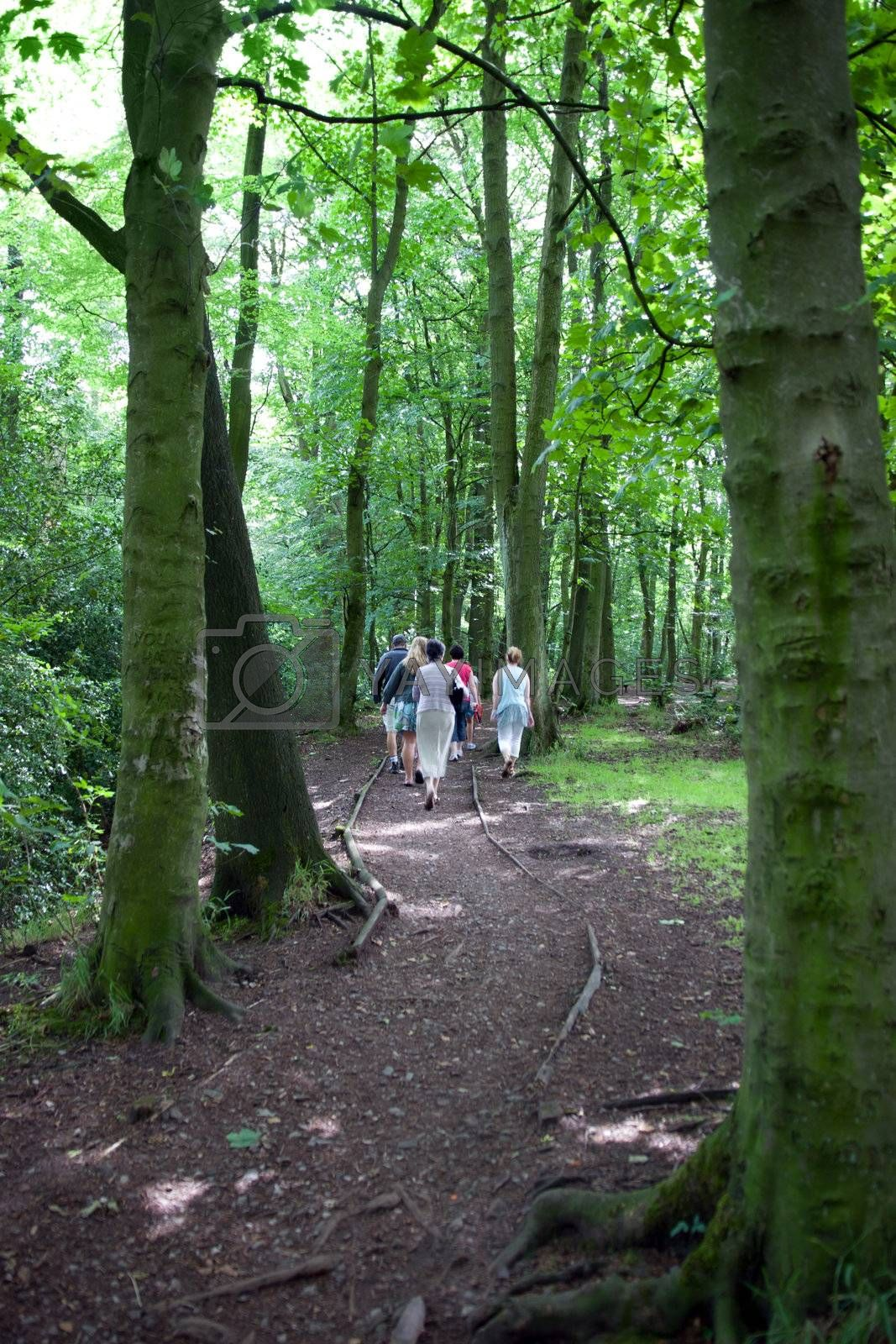 family taking a walk in mature woods in the Cheshire countryside in England
