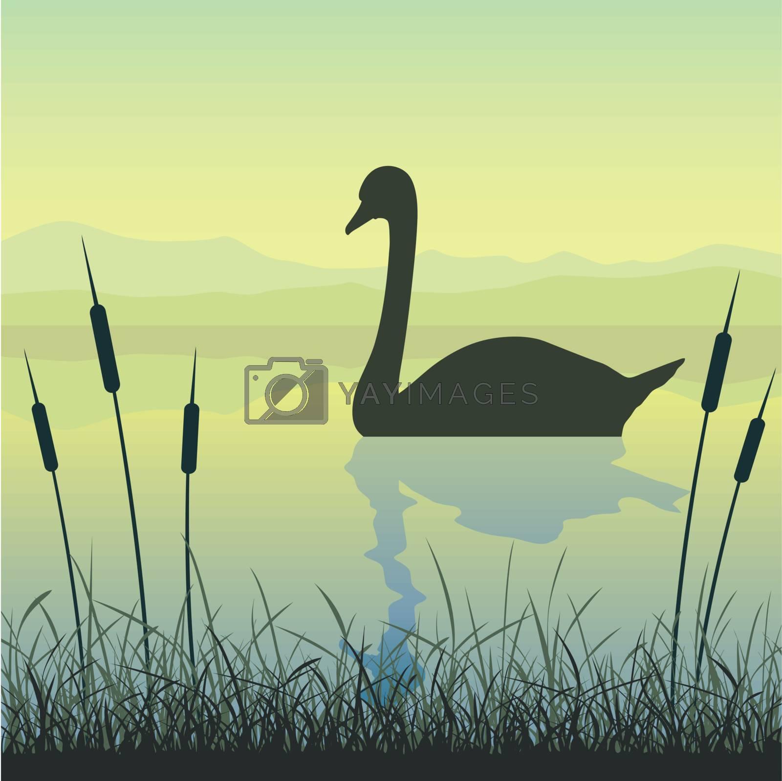 Royalty free image of Swan on Lake by Binkski