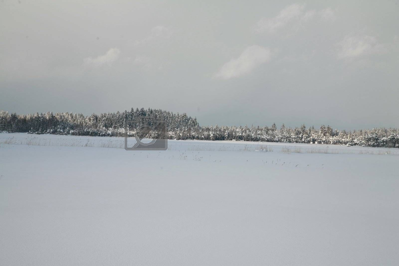 Royalty free image of Winter by yucas