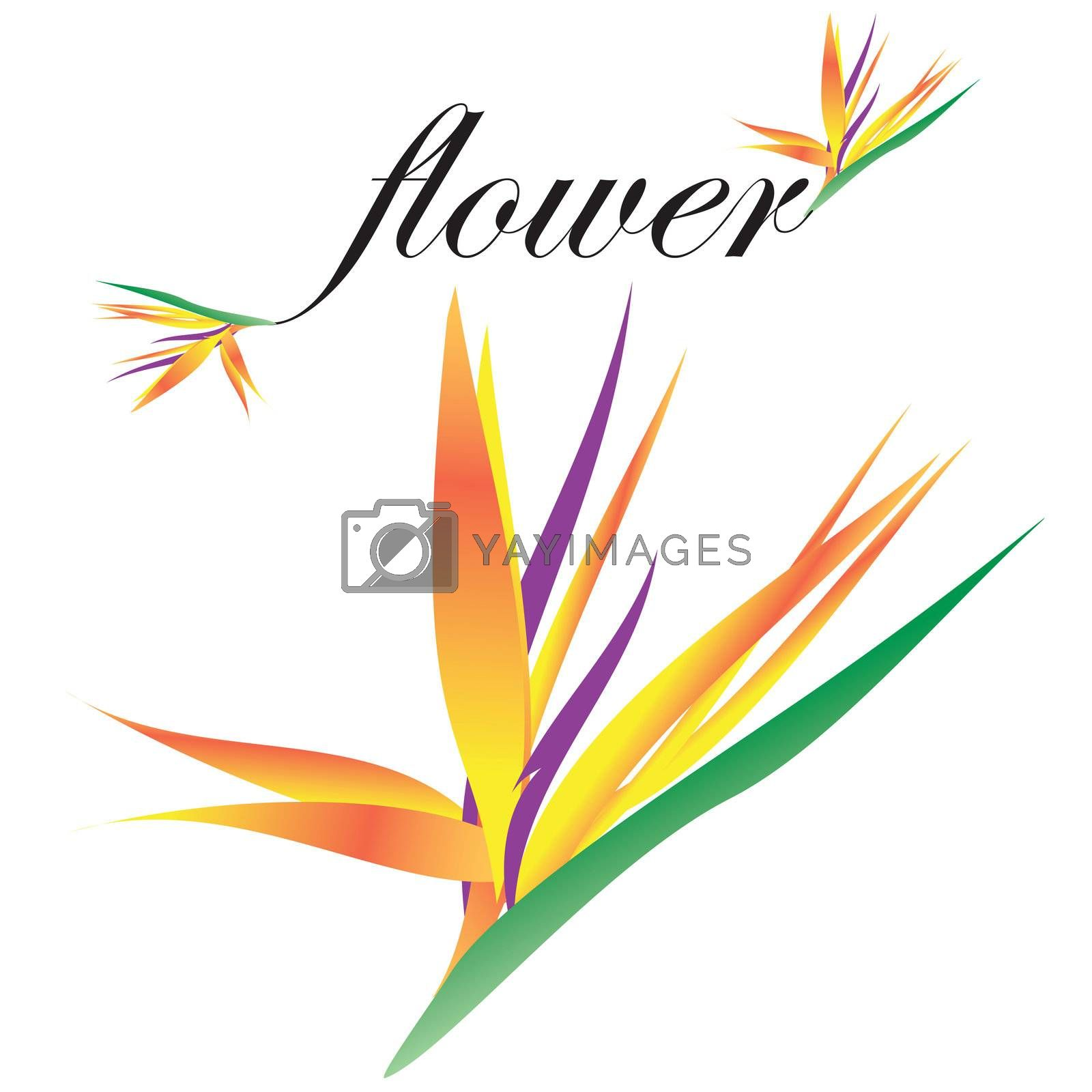 This is a rasterized vector bird of paradise flower that i designed in adobe illustrator