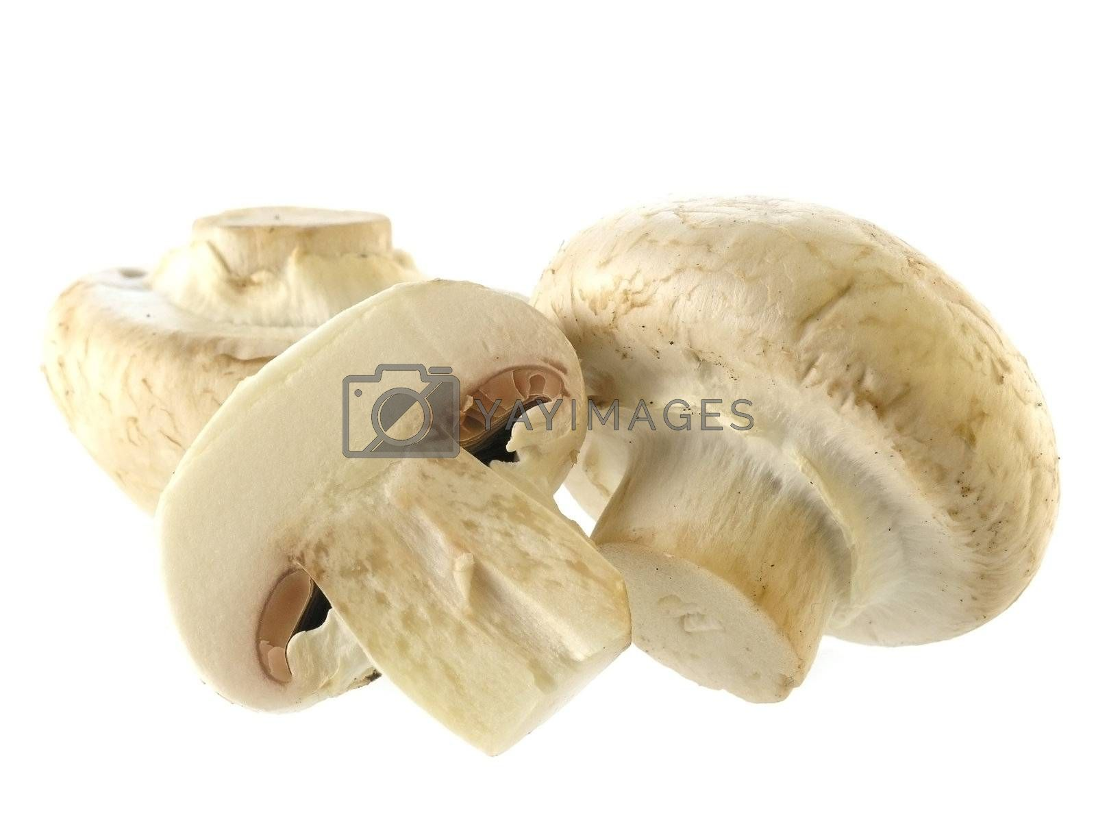 food series: fresh mushrooms isolated on solid background