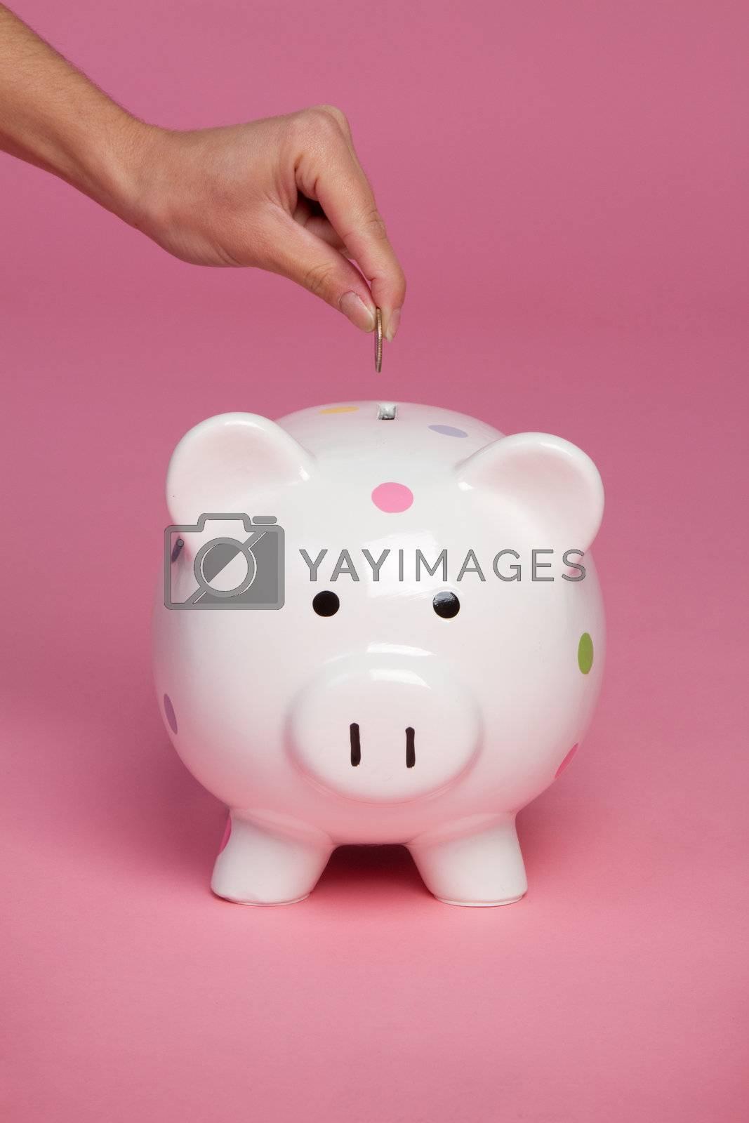Pink piggy bank coin money