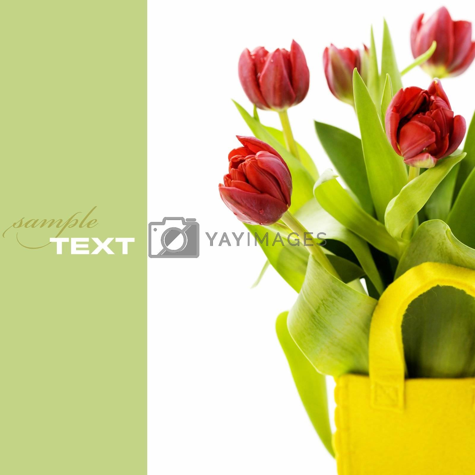 fresh tulips by klenova