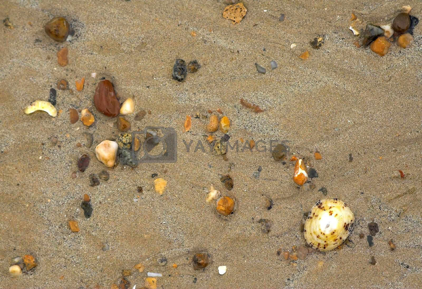 wet colorful stones and shell on sand beach