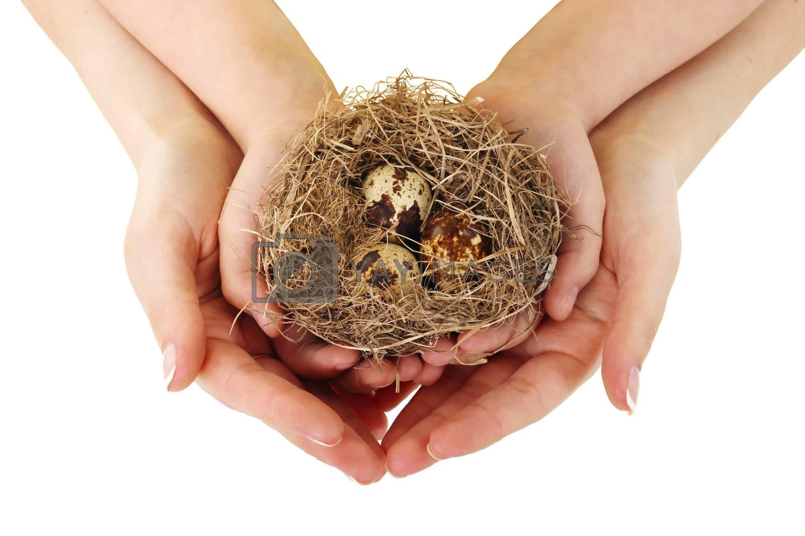 Bird nest in hands by aptyp_kok
