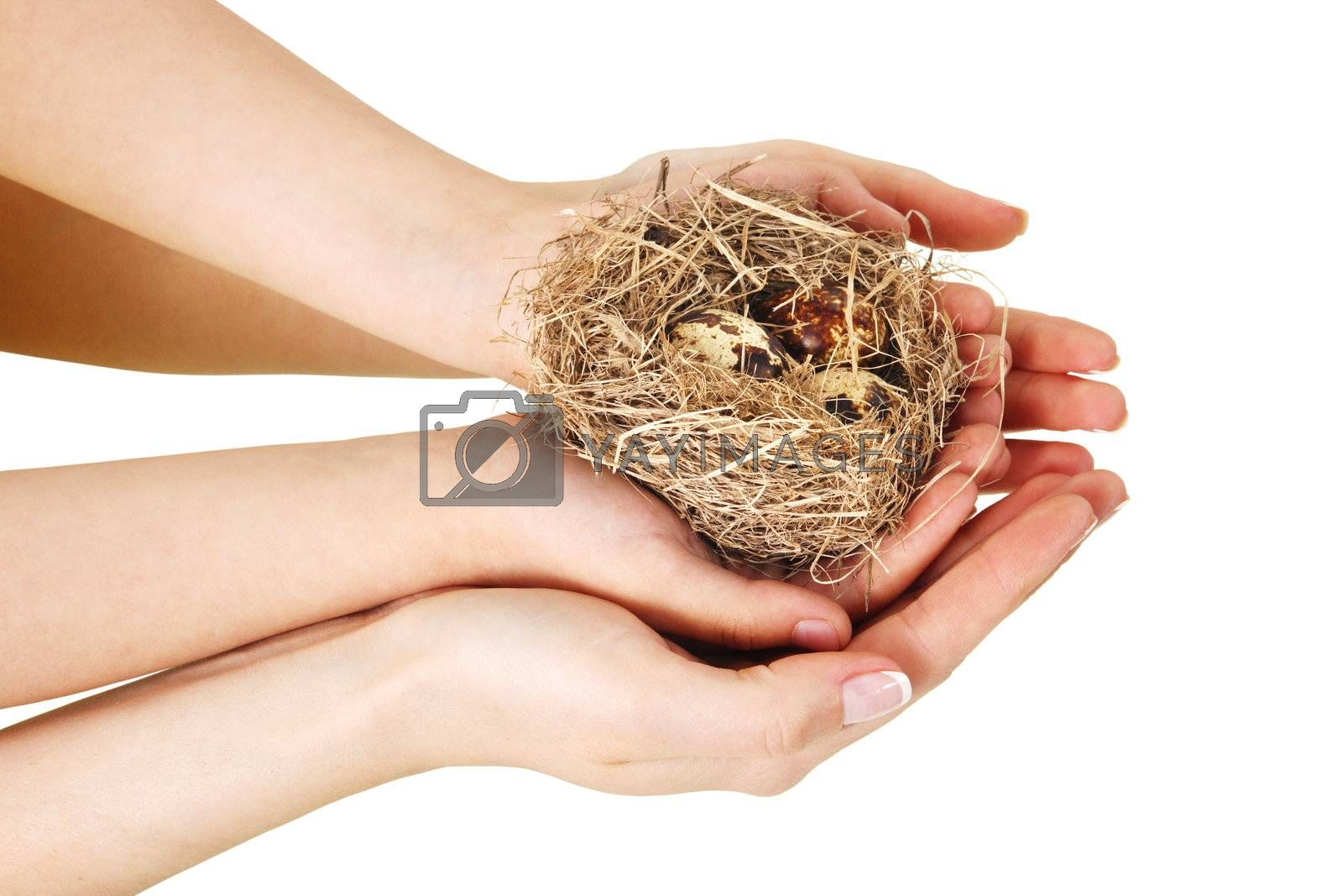 Bird nest in hands on the white background. (isolated)