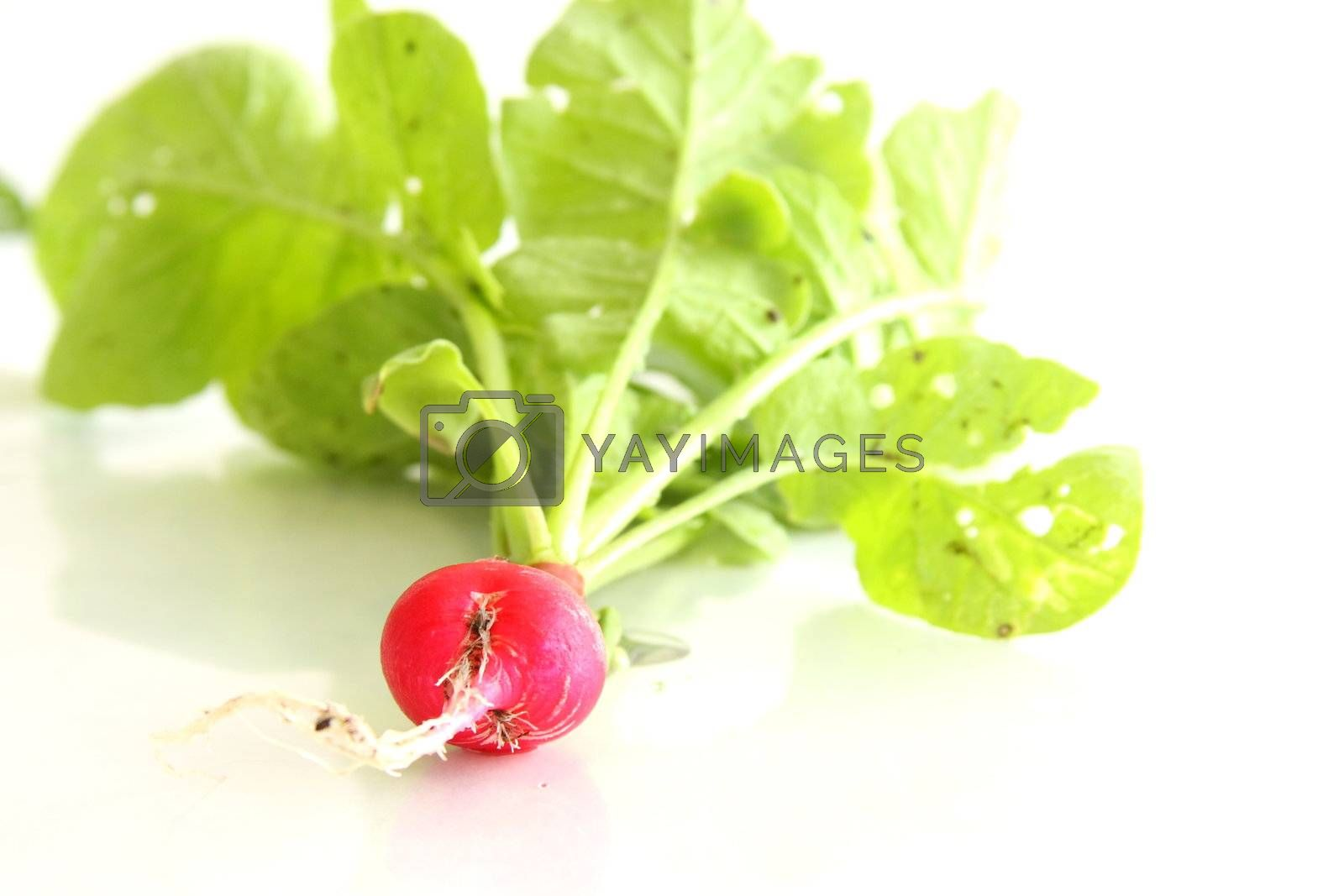 Shot of Cherry Belle Radish on white