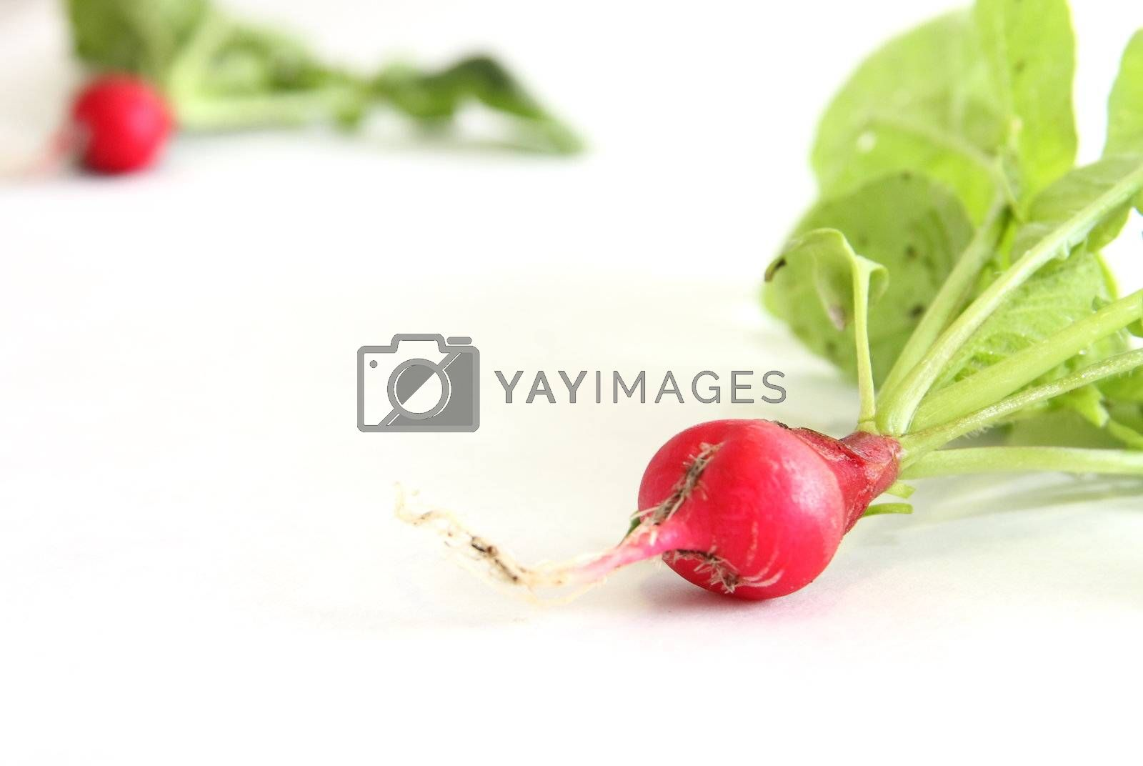 A couple of cherry belle radishes on white