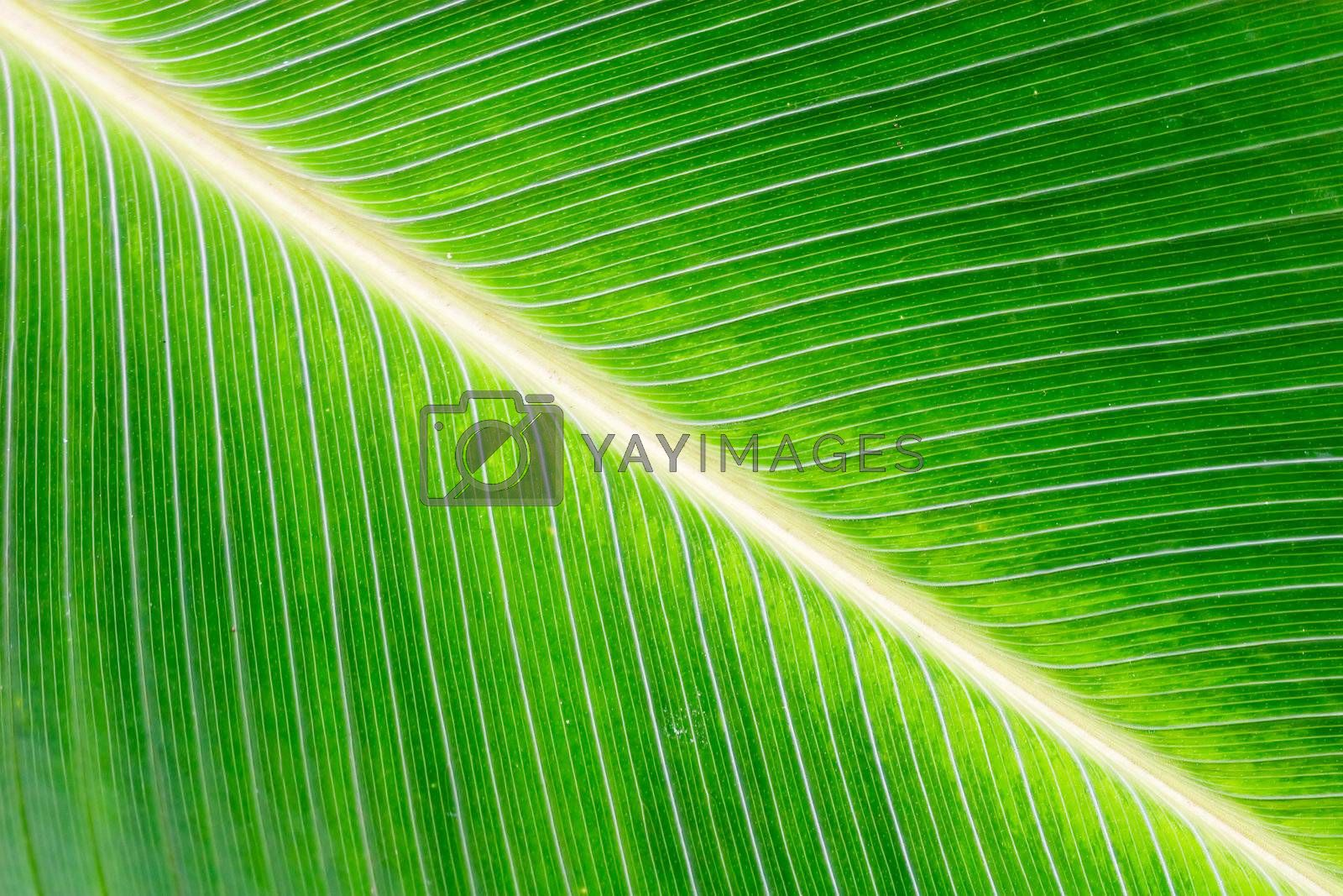 Close up of a leaf with vivid colors.