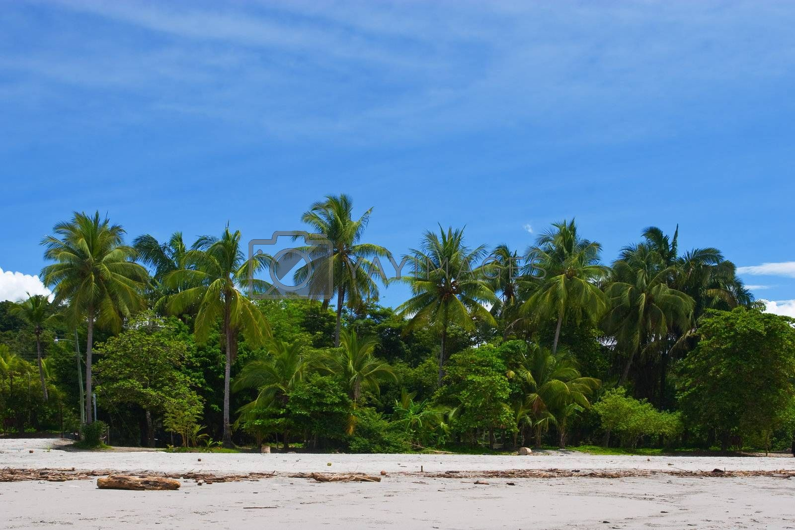 Royalty free image of Tropical View by ajn