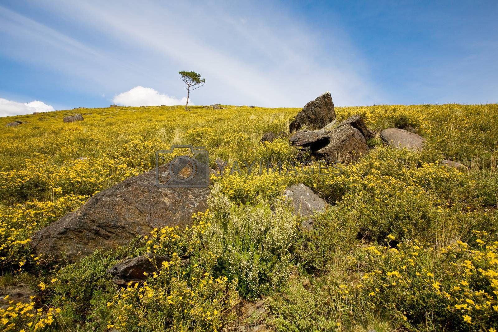 Royalty free image of Wild Landscape by ajn