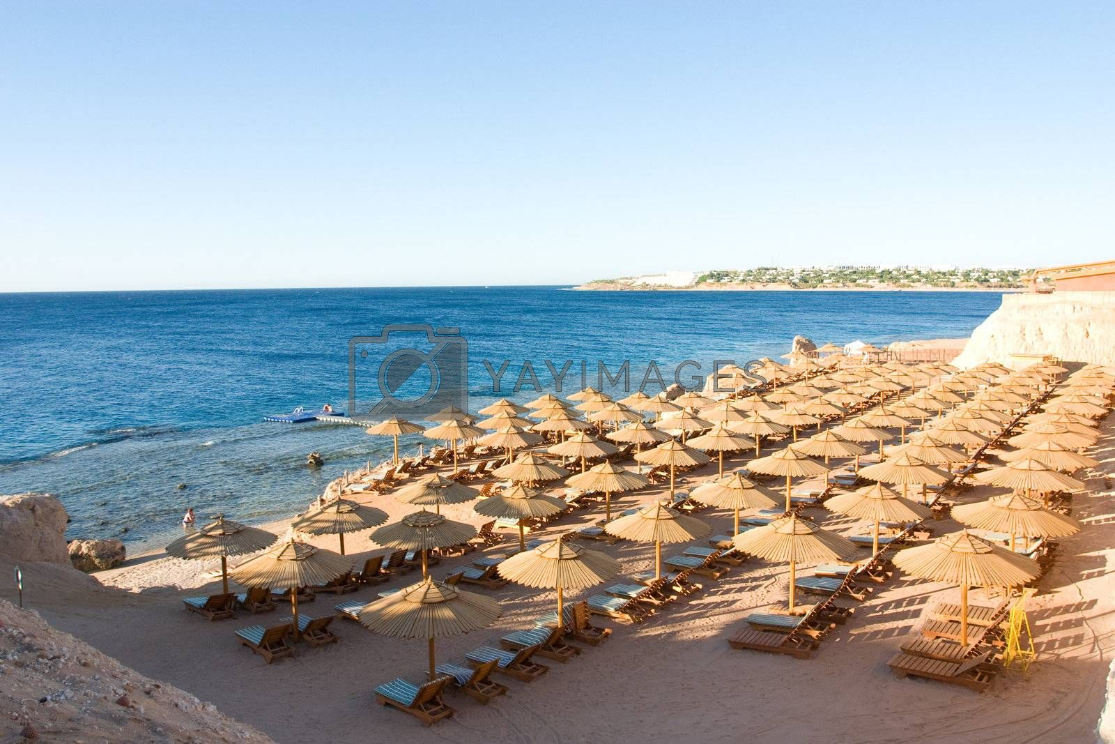 a morning beach in Egypt and sea coast with a strip of corals