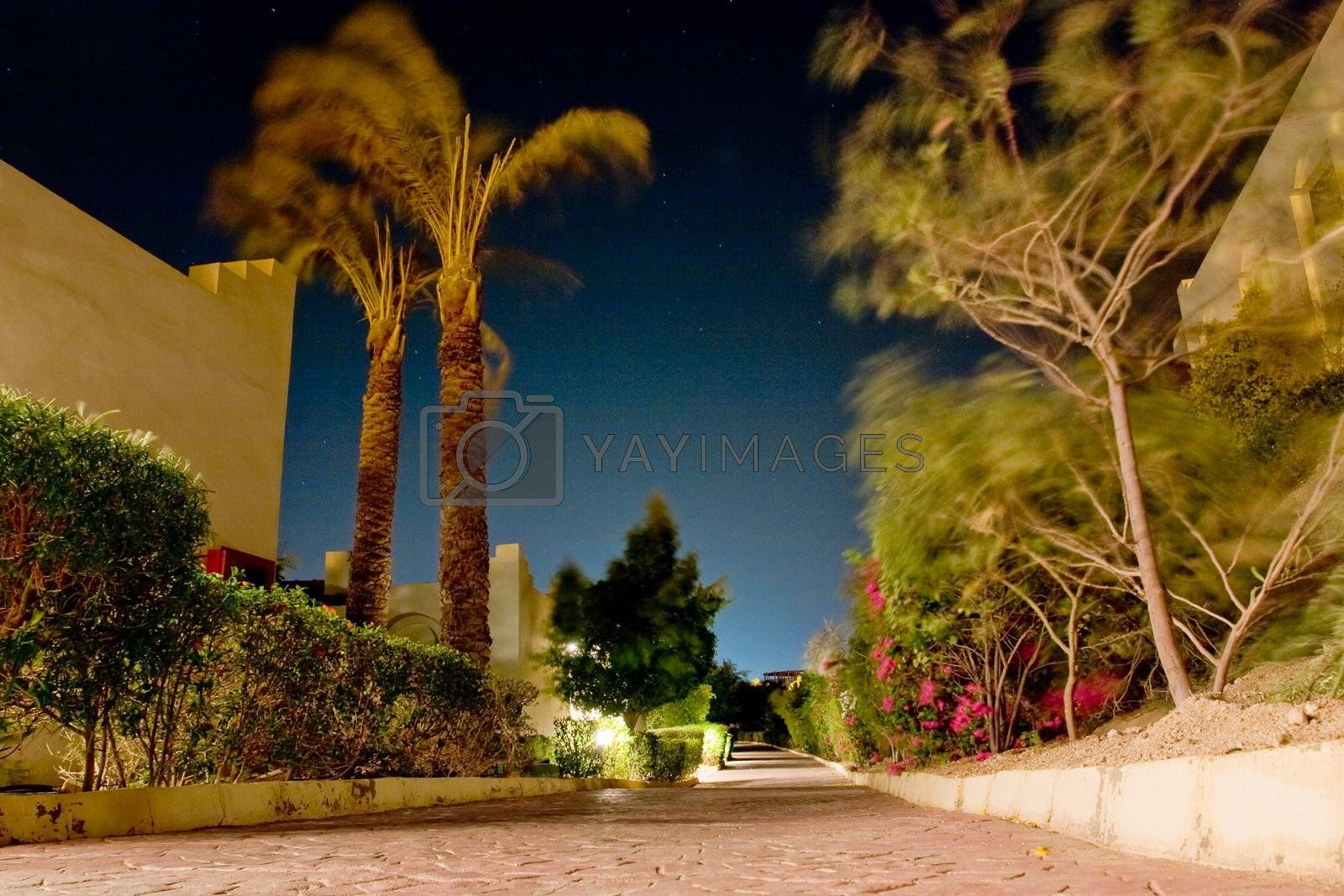 Night southern landscape with trees and a stone blocks