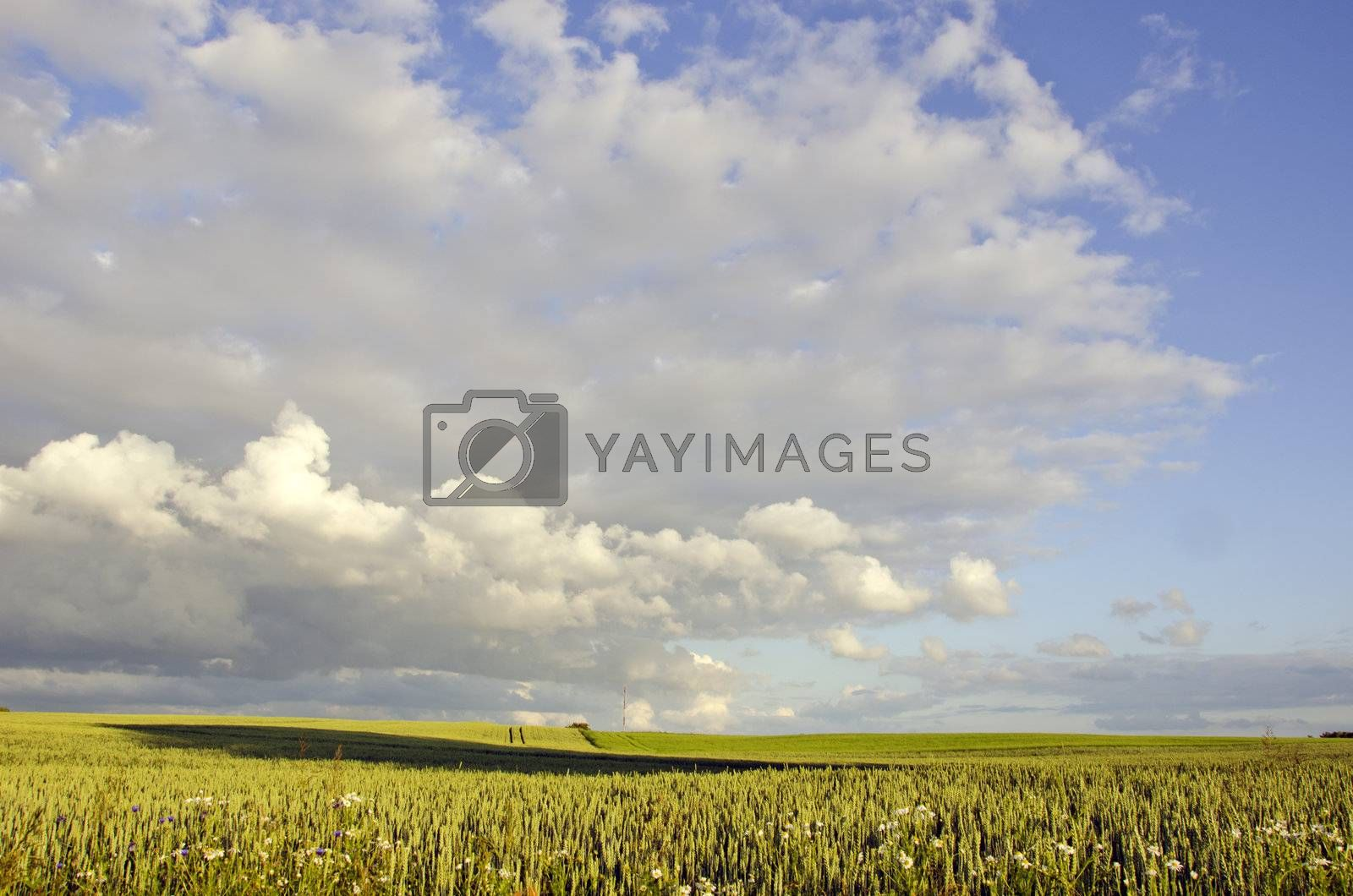 countryside evening landscape with clouds and meadows